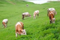 Производство сельхозпродукции в Удмуртии в январе сократилось на 2,3%
