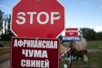 О регистрации африканской чумы свиней на территории Саратовской, Белгородской и Калининградской областей