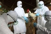 О ситуации по гриппу птиц в мире и второй панэпизоотической волне гриппа птиц