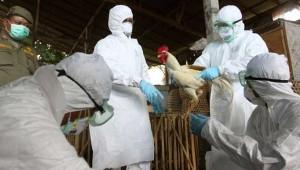 gripe-aviar