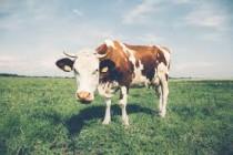 Для тобольских животноводов строят убойный цех