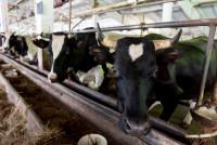 В Кировской области появится крупная молочная ферма