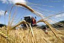 О ситуации на рынке зерна с 21 по 25 мая 2018 г.
