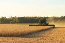 В Воронежской области посевная площадь увеличилась на 17%