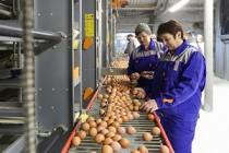 Волгоградская область произвела почти 818 миллионов штук яиц в 2017 году