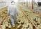 Ситуация по гриппу птиц в РФ на 16 июля 2018 года