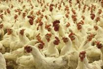 Группа «ПРОДО» завершила крупный инвестпроект по модернизации производства АО «ПРОДО птицефабрика Калужская»