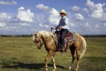 В Омской области зарегистрировали 15 очагов инфекционной анемии лошадей
