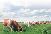 В Башкирии создадут не менее 450 сельхозпотребкооперативов