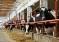 Семинар по животноводству «Десять факторов, которые ограничивают продуктивность КРС и увеличивают выбраковку» прошел в Туймазинском районе Башкирии