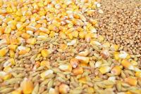 О ситуации на рынке зерна с 5 по 11 июня 2018 г.