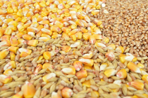 О ситуации на рынке зерна с 23 по 27 апреля 2018 года