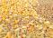 Ситуация на рынке зерна с 12 по 18 ноября 2018 года