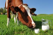 На поддержку татарстанских производителей молока дополнительно направят 800 млн рублей