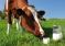 В Челябинской области обещают защиту аграриям от «молочных войн»