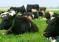 Перспективы развития племенного молочного скотоводства и совершенствование нормативно-правовой базы