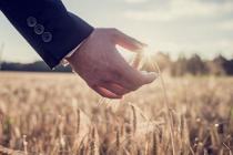 О ситуации на рынке зерна с 8 по14 мая 2018 г.