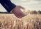 Регионам разрешили вводить «налоговые каникулы» для аграриев