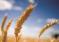 О ситуации на рынке зерна с 29 мая по 4 июня 2018 года