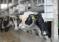 В шести районах Башкирии производится треть товарного молока