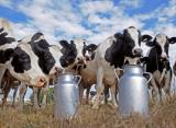 Ситуация на рынке молока и молокопродуктов  с 18 по 22 октября 2021 года