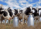 Составлен молочный рейтинг предприятий Башкирии за 9 месяцев текущего года