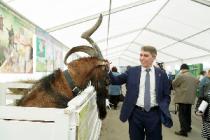 В Туле прошла Всероссийская выставка молочного козоводства