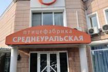 «Среднеуральской птицефабрике» грозит штраф из-за куриного помета