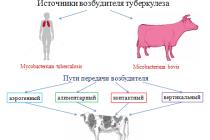 Эпизоотический процесс и патогенез туберкулеза у крупного рогатого скота