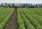 Тюменским фермерам рассказали, как заработать на корпорациях