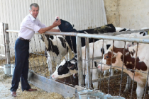 Стартовал прием заявок на получение гранта «Семейные животноводческие фермы» в Пермском крае