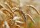 Ситуация на рынке зерна с 20 по 24 мая 2019 года