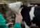 С 17 по 20 апреля пройдет IX Международный Ветеринарный Конгресс