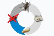 Борьба с синантропными мухами с помощью метопрена