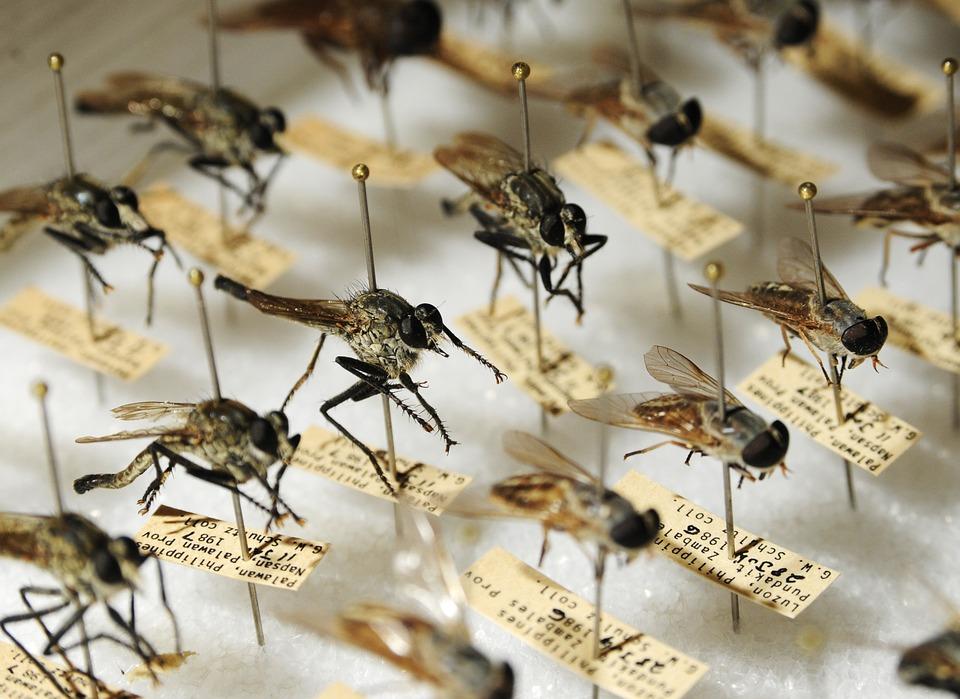 Синатропные мухи