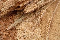 Ситуация на рынке зерна с 26 по 30 августа 2019 года