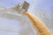Минсельхоз России: на 14 сентября собрано 88,2 млн тонн зерна