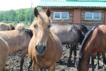 Башкортостан: в фермерских хозяйствах наращивают производство кумыса