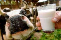 Кировская область заняла третье место в России по приросту производства молока