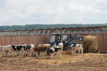 Прием документов от глав КФХ на развитие семейных животноводческих ферм Пермского края