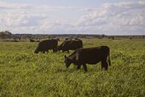 Башкирия и Марий Эл договорились совместно развивать сельхозкооперацию