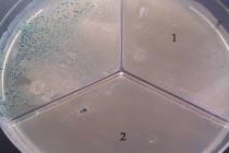 Вопросы борьбы с антибиотикорезистентными микроорганизмами на птицефабриках РФ