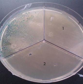 voprosy-borby-s-antibiotikorezistentnymi-mikroorganizmami-na-pticefabrikax-rf-ris-1