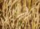 Ситуация на рынке зерна с 6 по 8 мая 2019 года