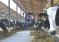 Удмуртские животноводы подвели итоги своей работы за девять месяцев – молоко сохраняет динамику роста