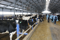 Итоги работы живодноводства в Глазовском районе Удмуртии за 8 месяцев