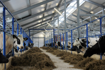 Производство молока в Удмуртии за семь месяцев текущего года приросло на 5,1%