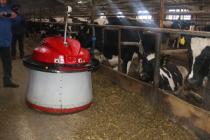 На башкирской ферме трудится робот-скотник