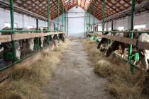 В Агаповском районе Челябинской области открылся новый молочный комплекс