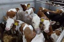 Прием документов от СХПК и семейных ферм Пермского края для субсидий